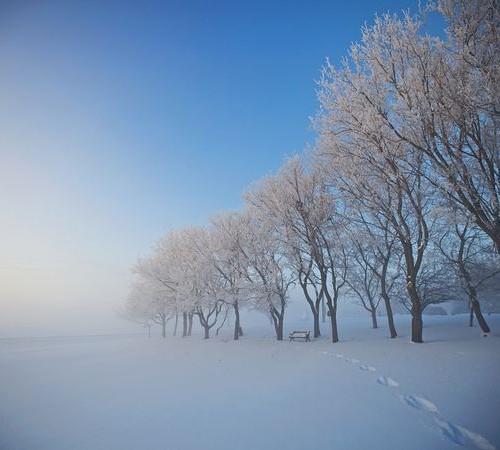 snowy-trees-alberta-canada_30711_600x450