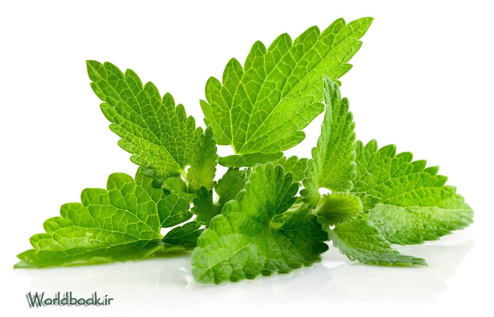 تصویر از نعناع گیاهی با خواص دارویی شگفت انگیز